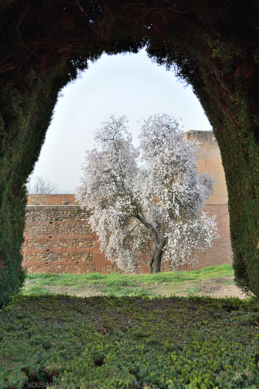 Alhambra-Granada-Spain-00085