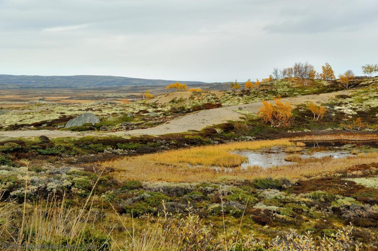Einundalen-Hedmark-Norway-104
