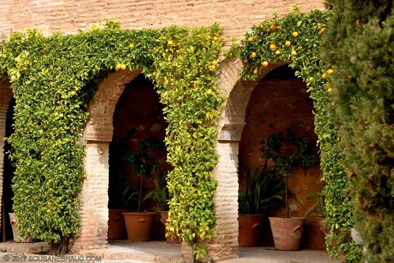 Generalife-Granada-Spain-00167_02