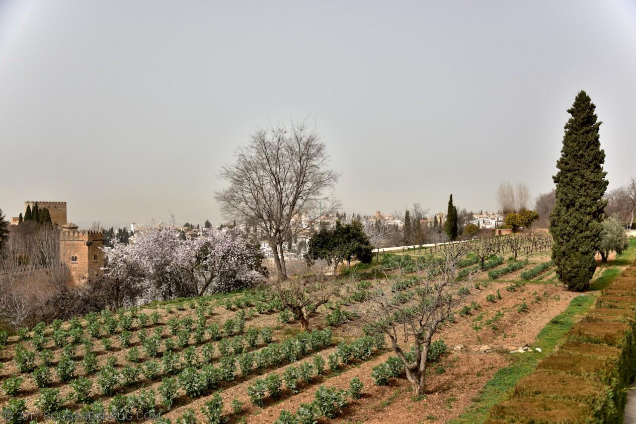 Generalife-Granada-Spain-00168_01