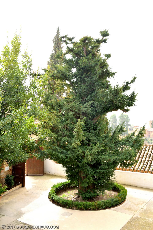 Generalife-Granada-Spain-00176