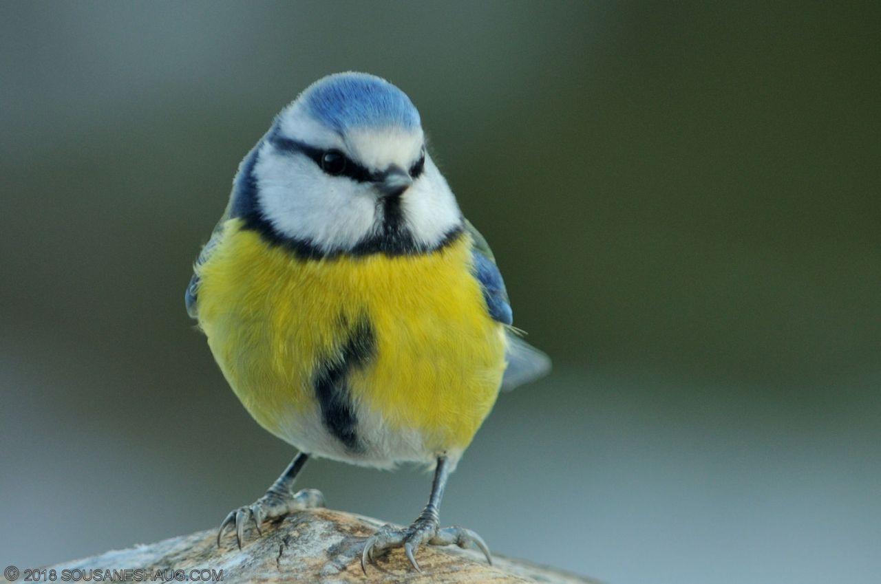 Birds-0721