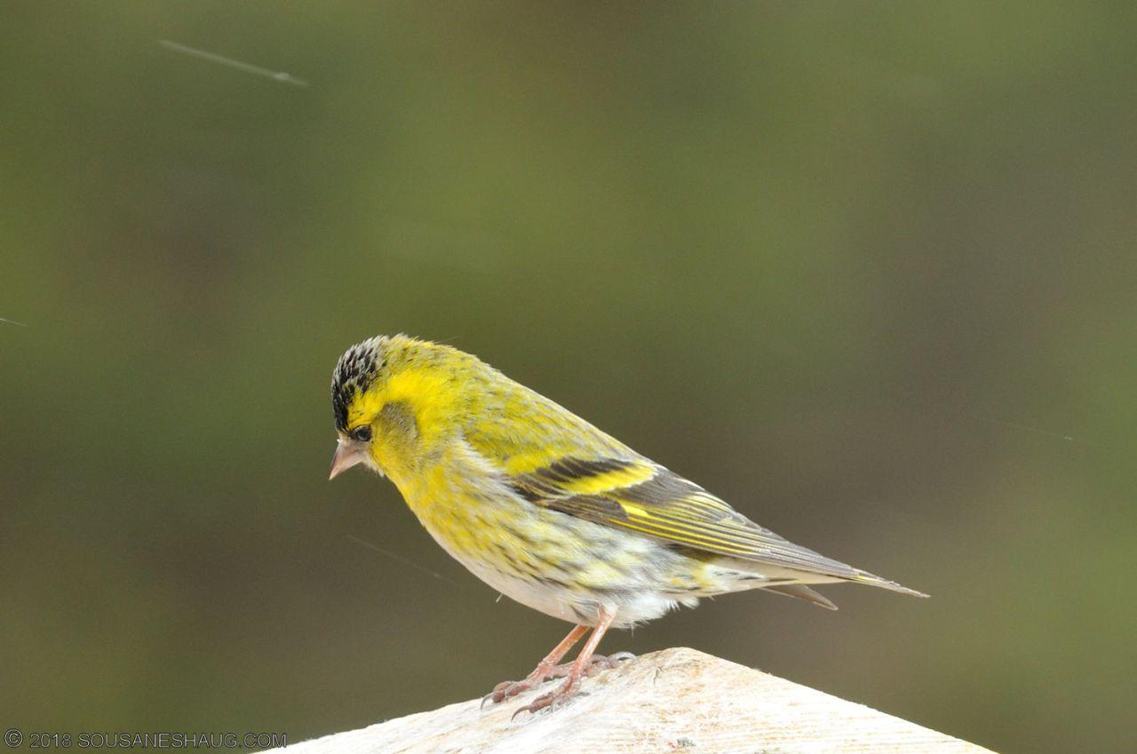 Birds-0723