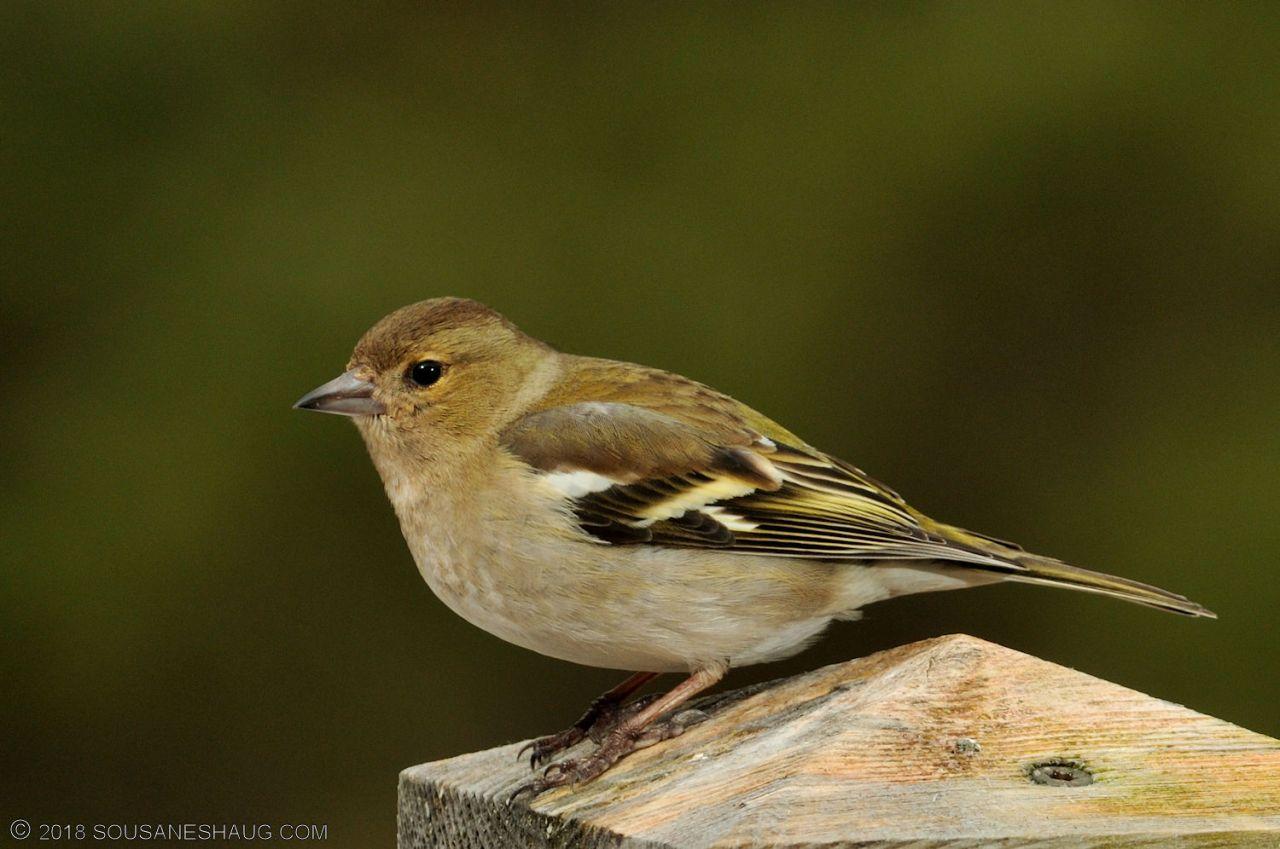 Birds-0724