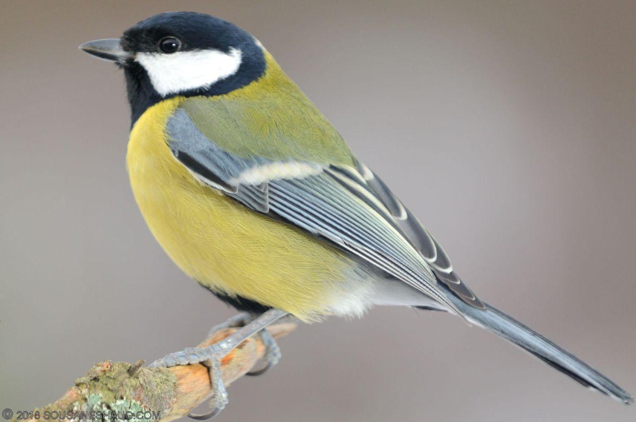 Birds-0727