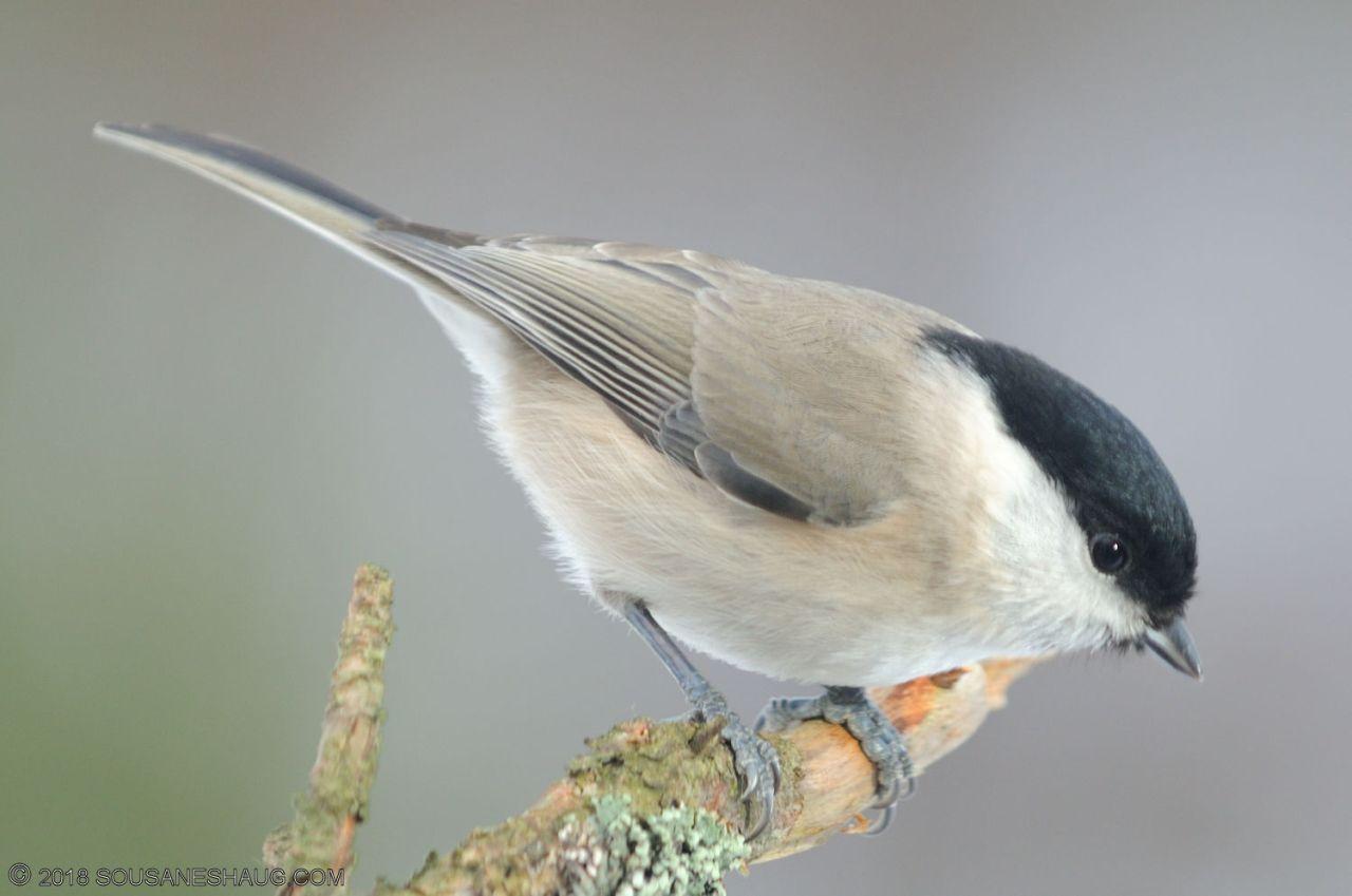 Birds-0728