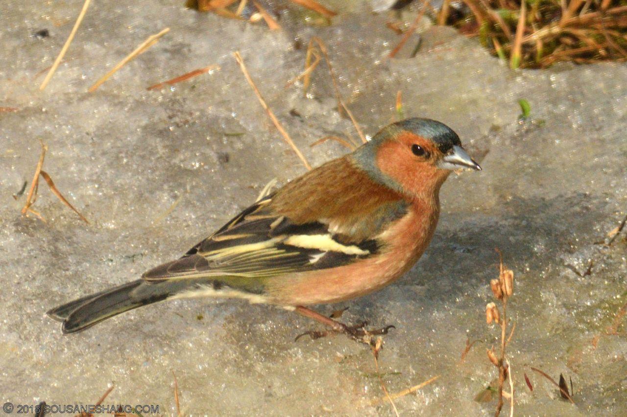 Birds-0729