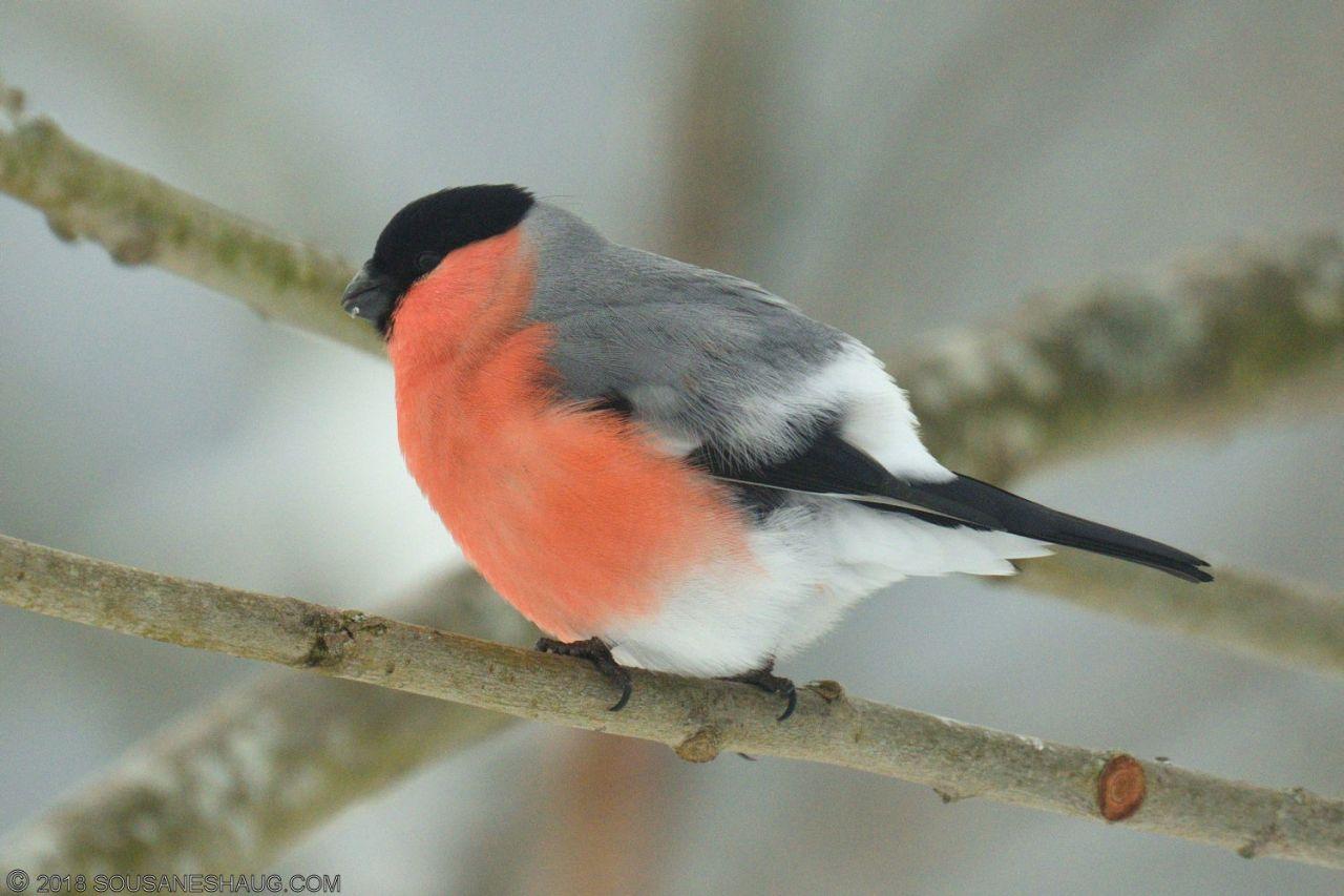Birds-0730