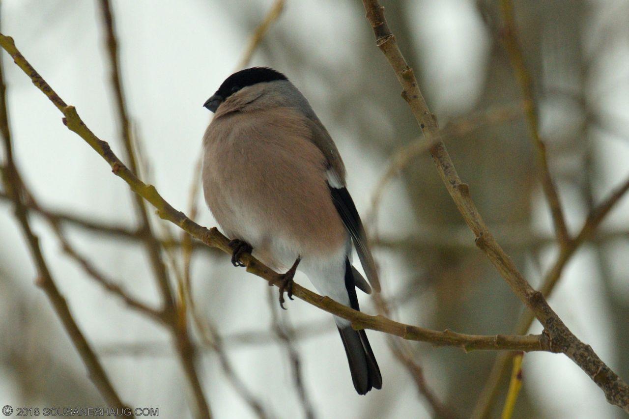 Birds-0731