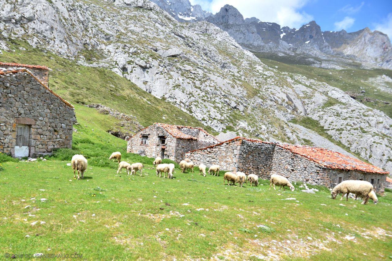 Picos de Europa-Spain-0131