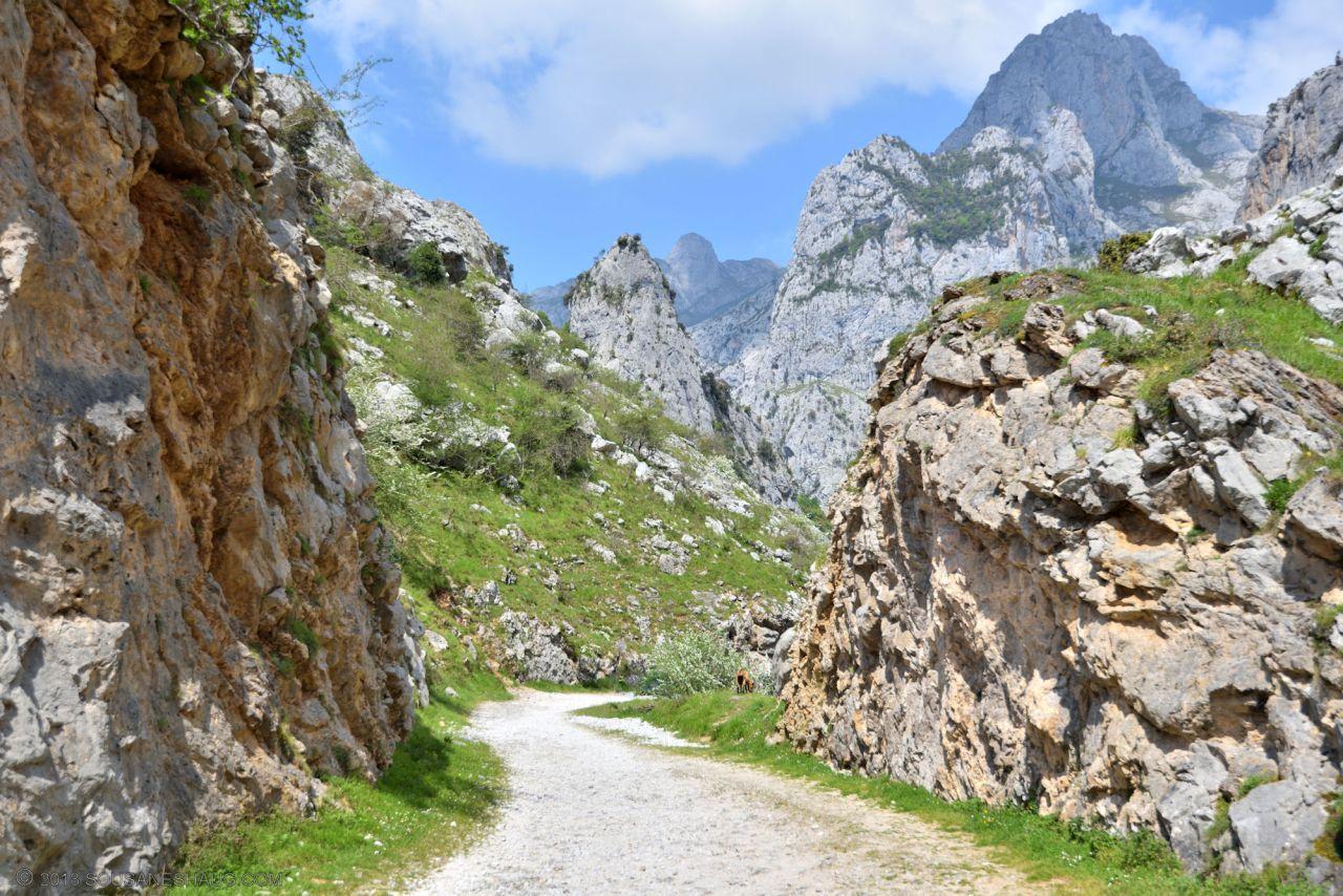 Picos de Europa-Spain-0139