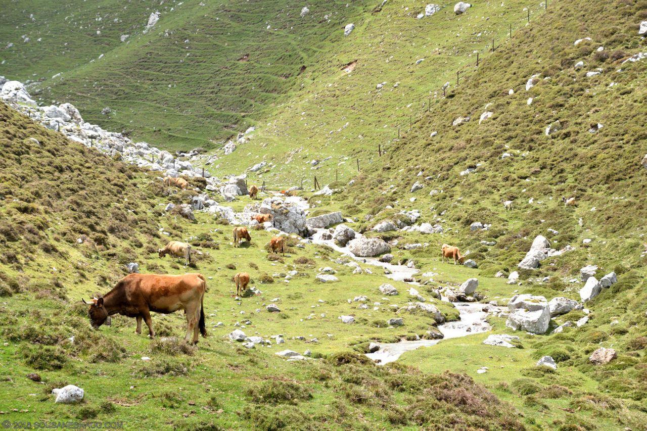 Picos de Europa-Spain-0162
