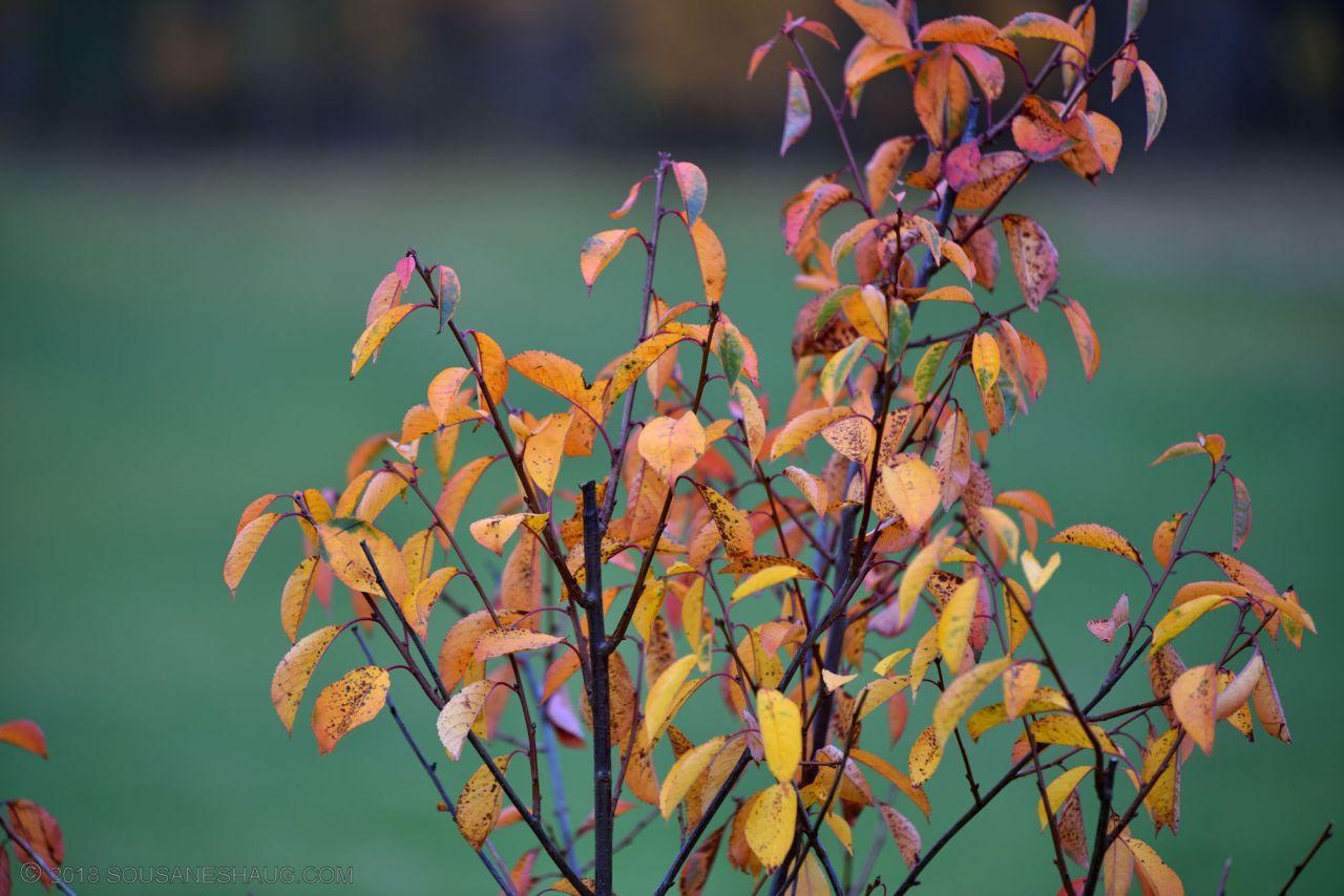 Autumn-garden-0313