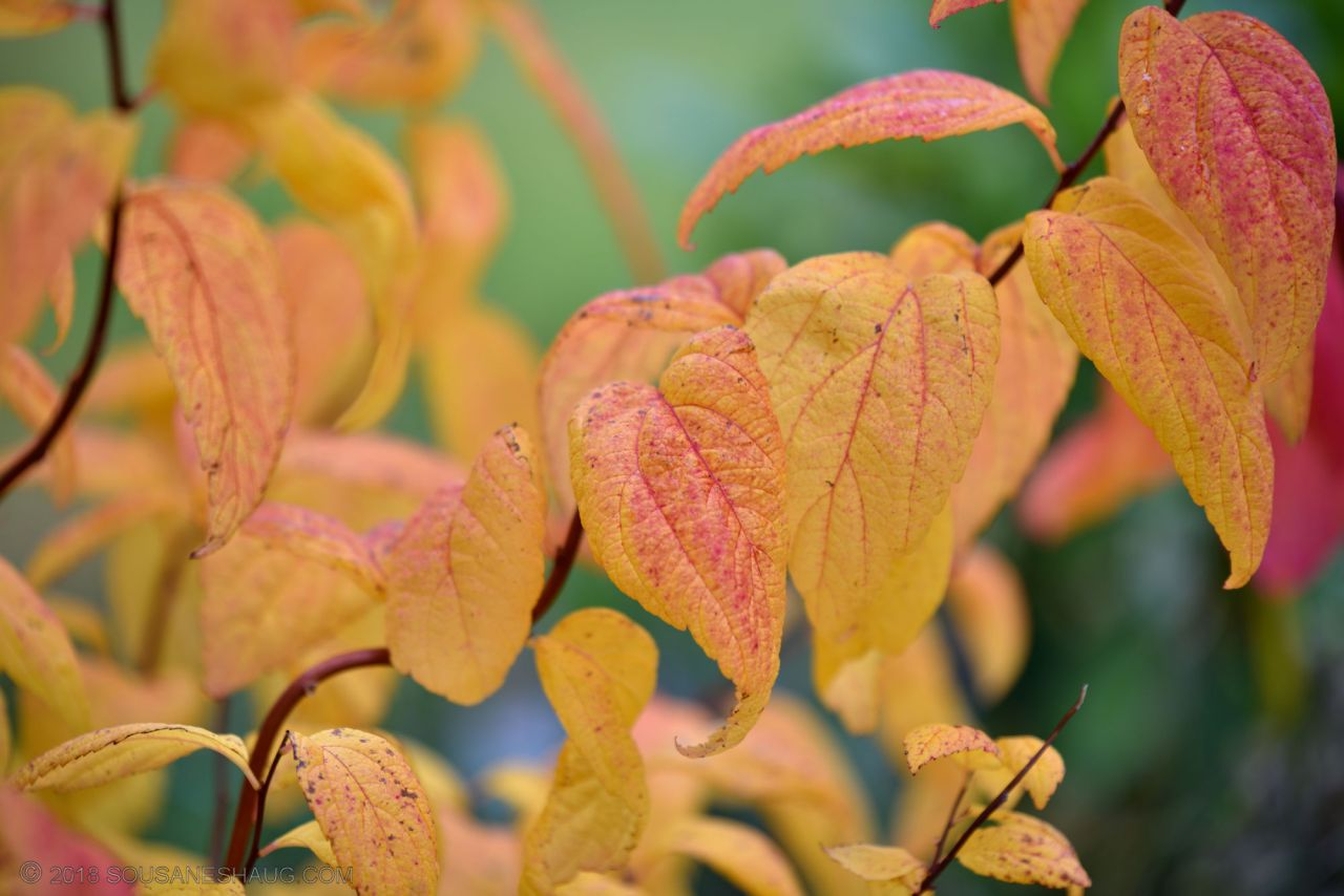 Autumn-garden-0314