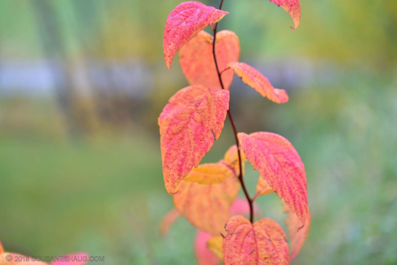 Autumn-garden-0315