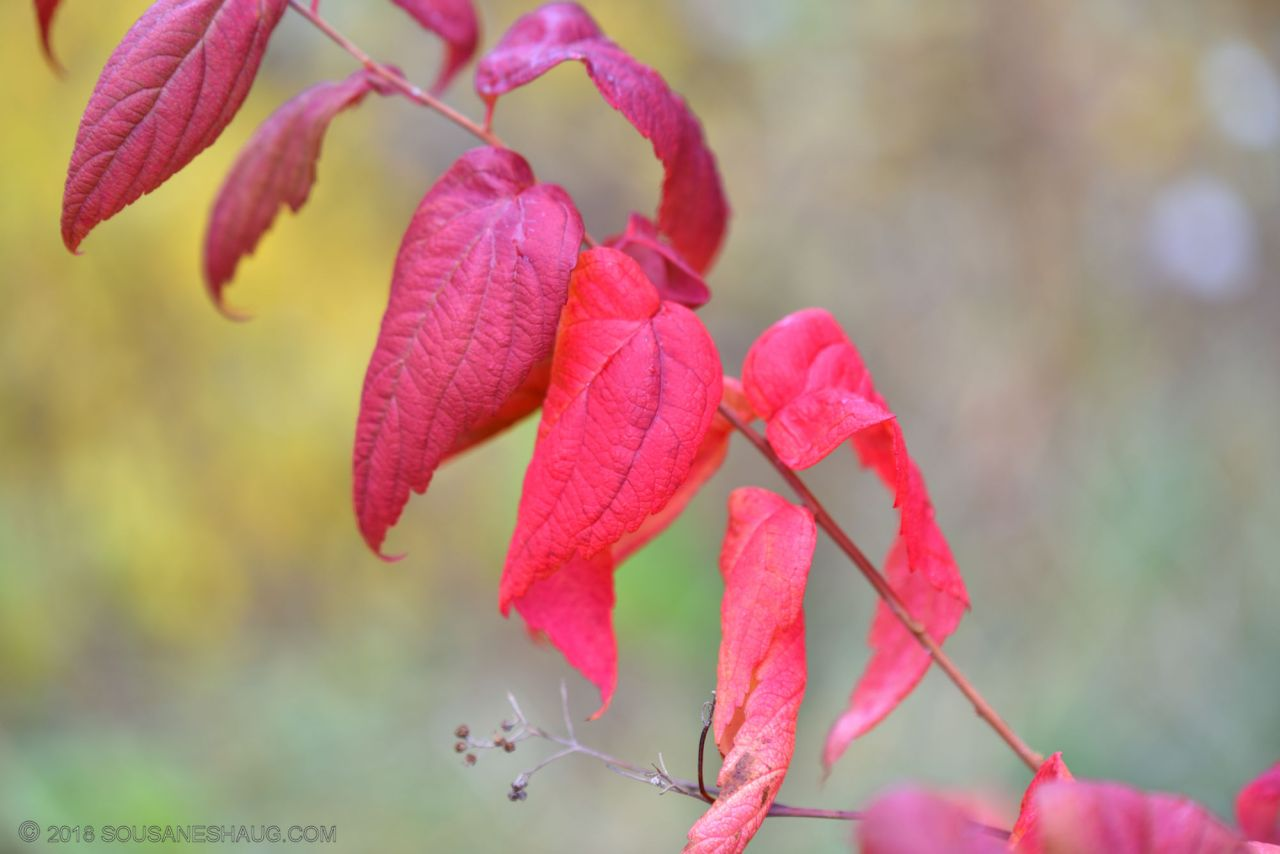 Autumn-garden-0316