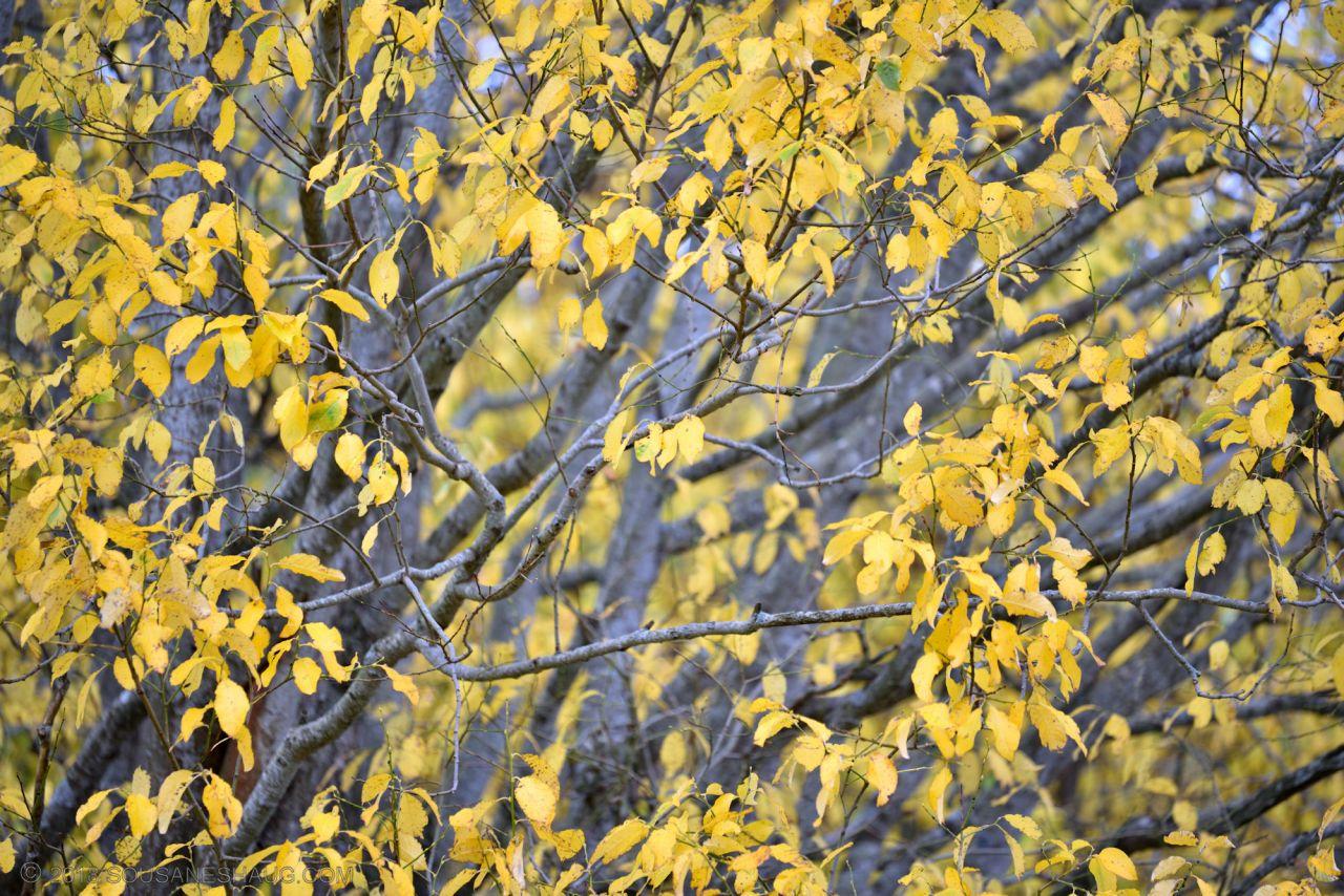 Autumn-garden-0317