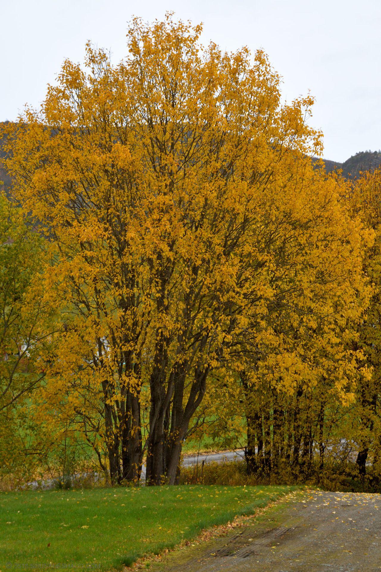 Autumn-garden-0318