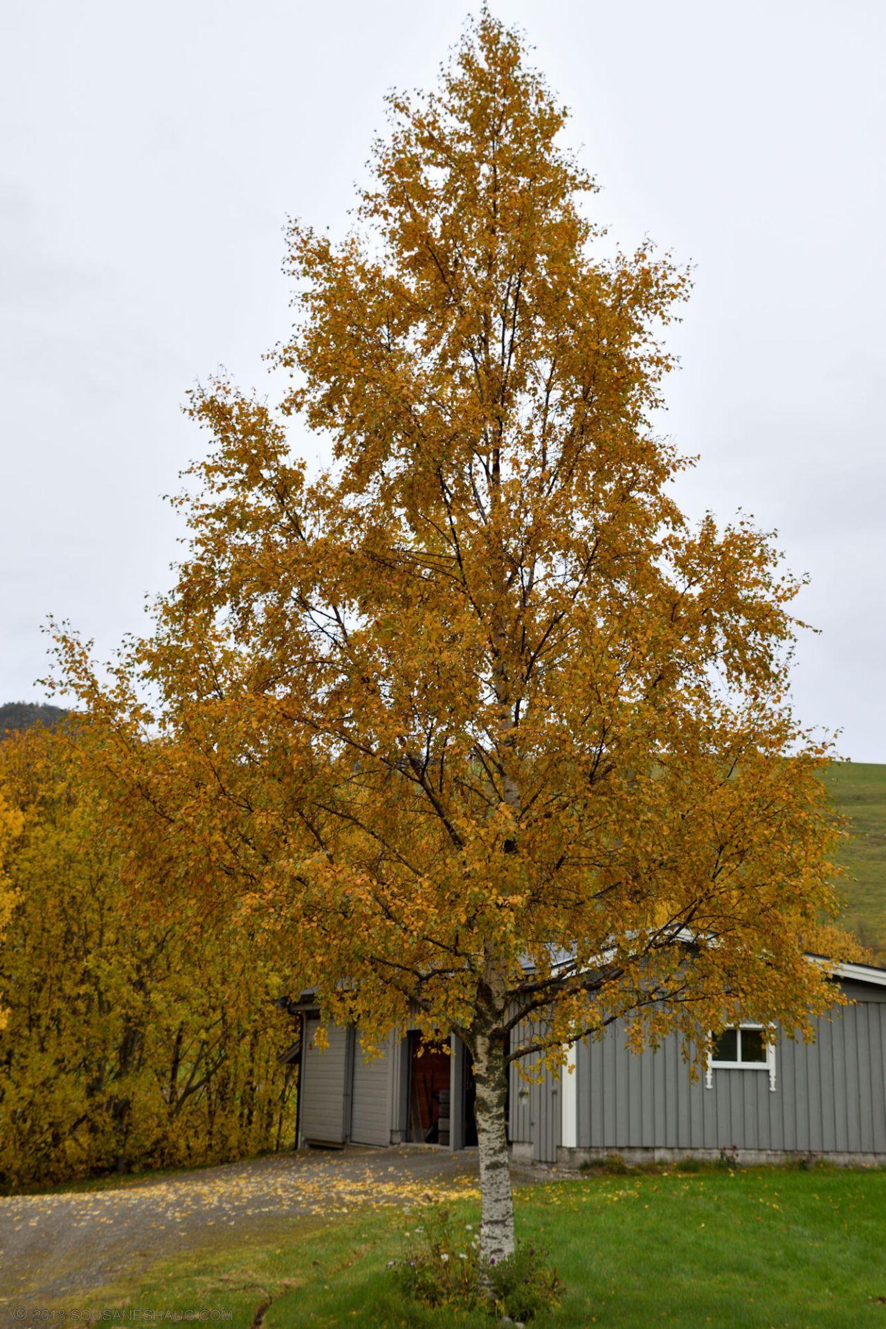Autumn-garden-0319