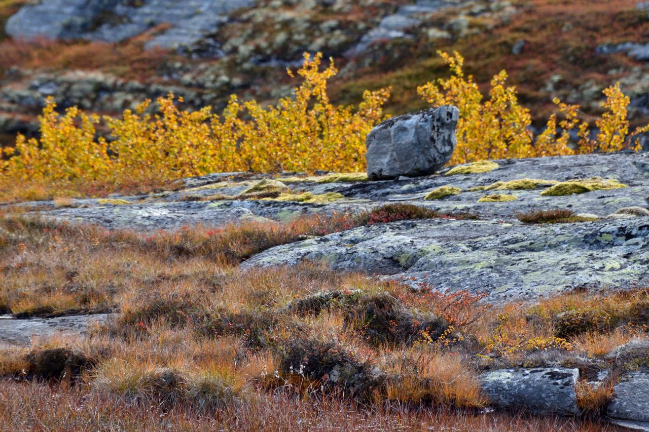 Autumn-Norway-0258
