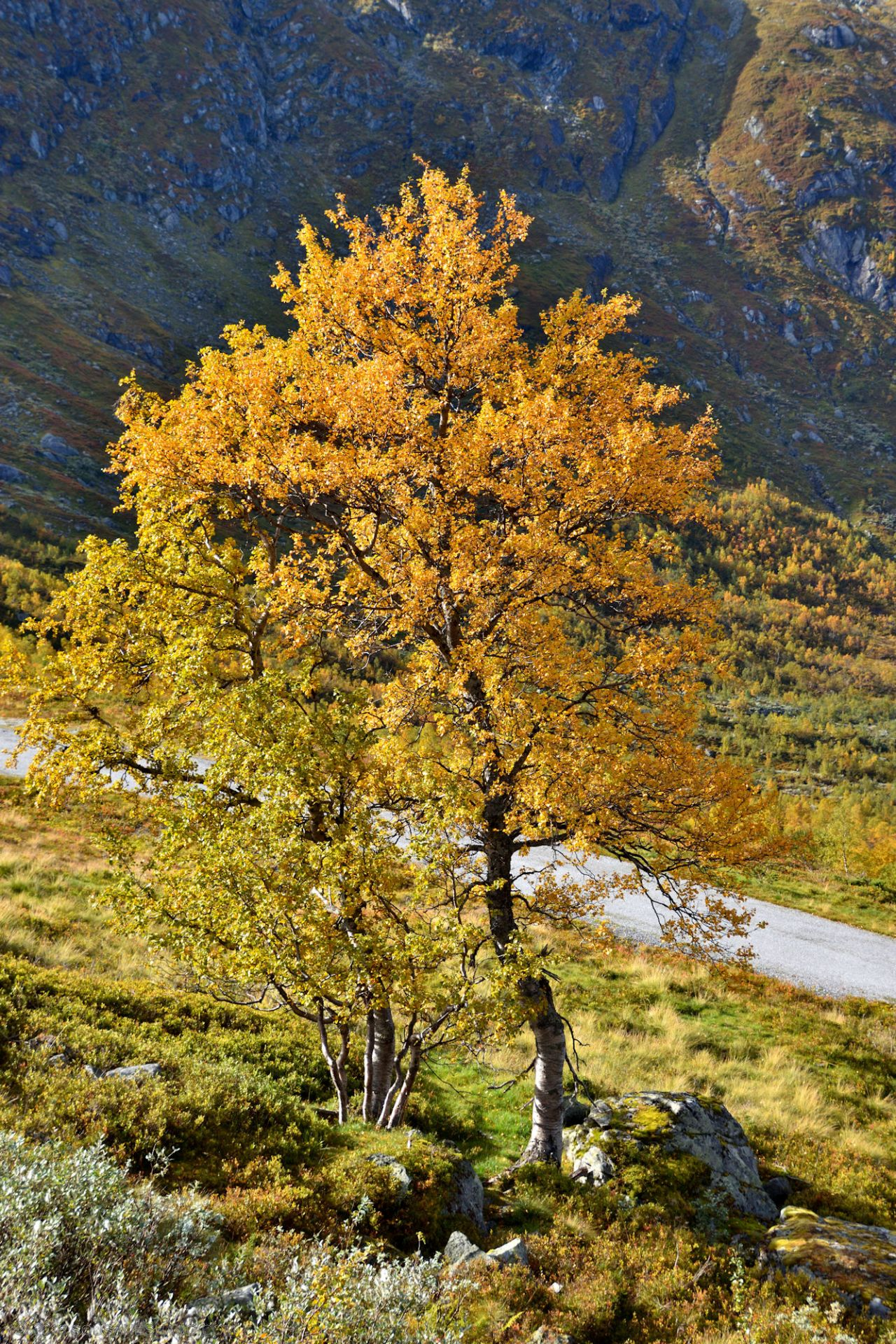 Autumn-Norway-0262