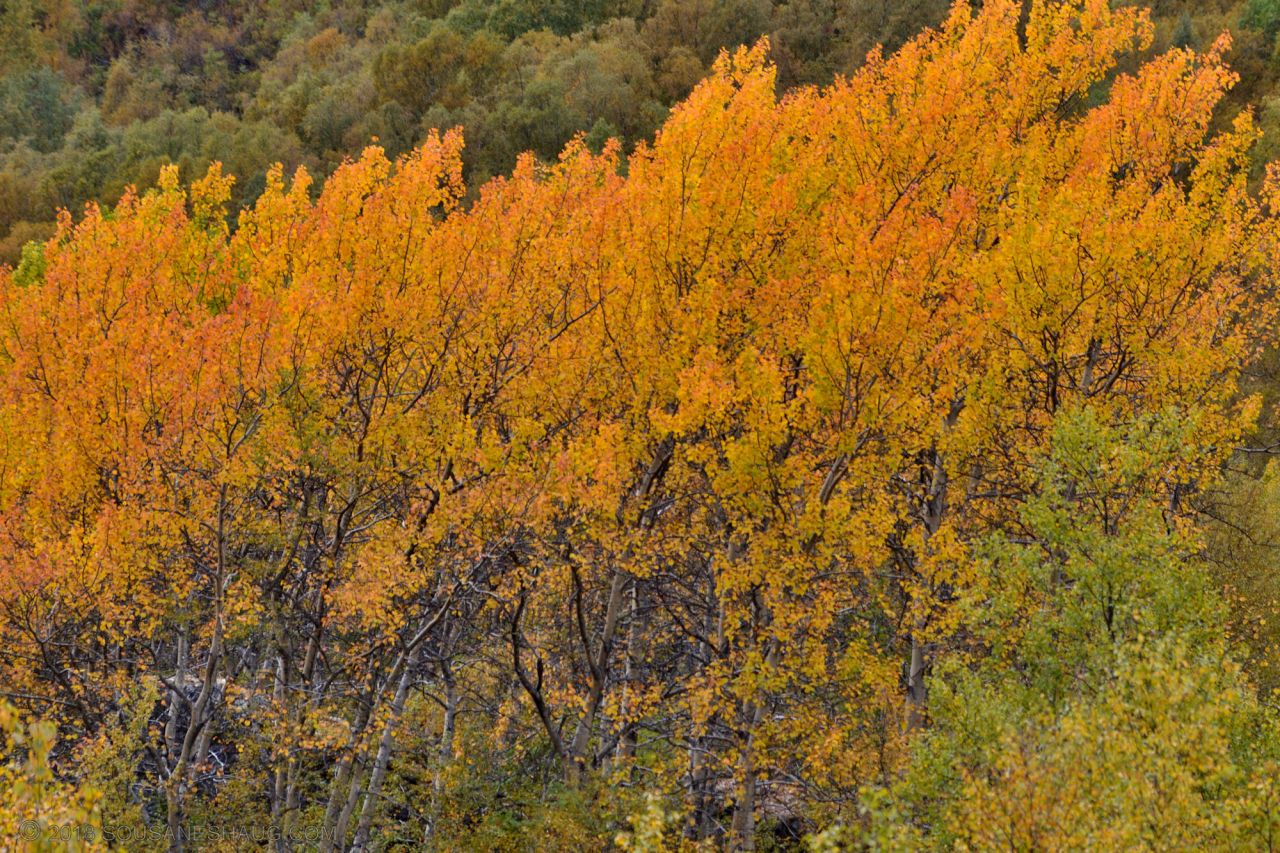 Autumn-Norway-0263